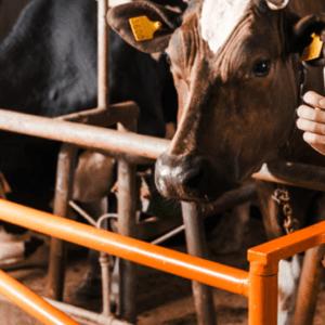 Webinar Gewerbespeicher in der Landwirtschaft